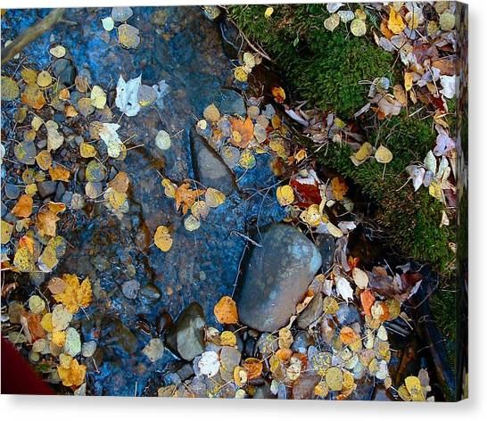 Shorelines - Campbell Creek Canvas Print