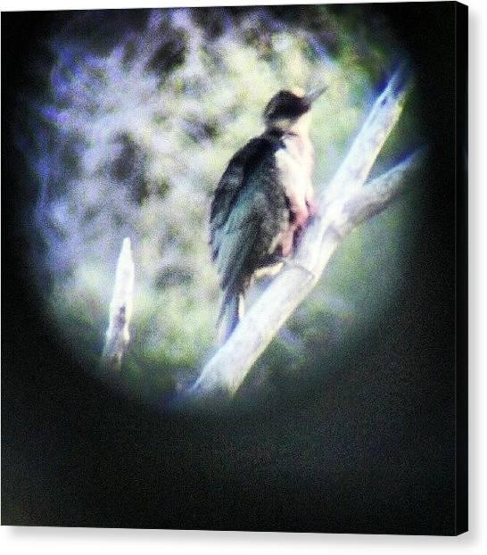 Songbirds Canvas Print - Shot Through Binoculars by Lila Sisk-Popow