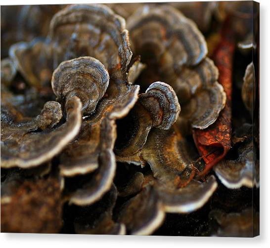 Oysters Canvas Print - Shrooms Abstracted by Susan Capuano