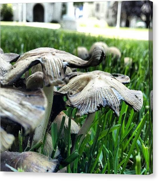 Ohio University Canvas Print - Shrooms With A View. #macro #10likes by Jermaine Young
