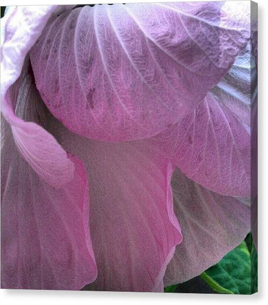 Droid Canvas Print - Shy Hibiscus.  Another #beautiful by Carla From Central Va  Usa