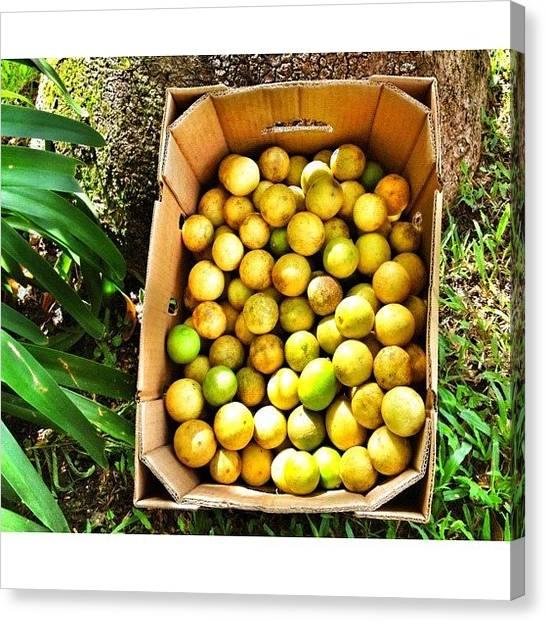 Lemons Canvas Print - Si Del Cielo Te Caen Limones Aprende A by Ivelaida Rivera