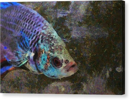Siamese Fighting Fish Canvas Print