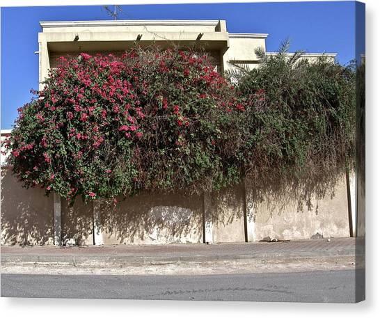 Sidewalk Florae In Doha Canvas Print by David Ritsema