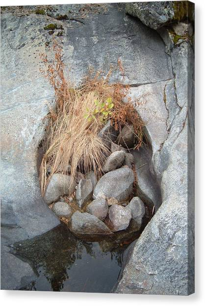 Sierra Canvas Print - Sierra Nevada Forest 2 by Naxart Studio