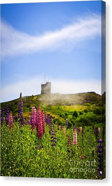 Fortification Canvas Print - Signal Hill In St. John's Newfoundland by Elena Elisseeva