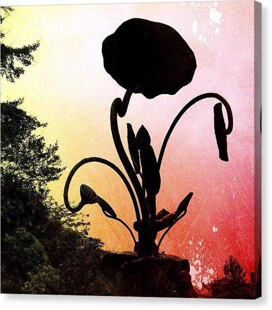 Judaism Canvas Print - Silhouette Of Bronze Flower by Marc Gascoigne