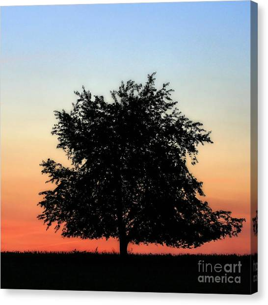 Make People Happy  Square Photograph Of Tree Silhouette Against A Colorful Summer Sky Canvas Print