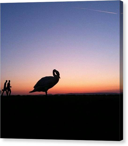 Swans Canvas Print - #silhouette #silhouettes #giant #swan by Kevin Zoller