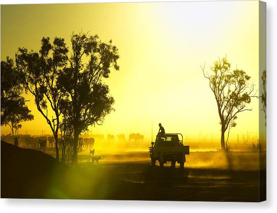 Silhouetted Cattle Muster At Sunset, Armraynald Station Canvas Print by Johnny Haglund