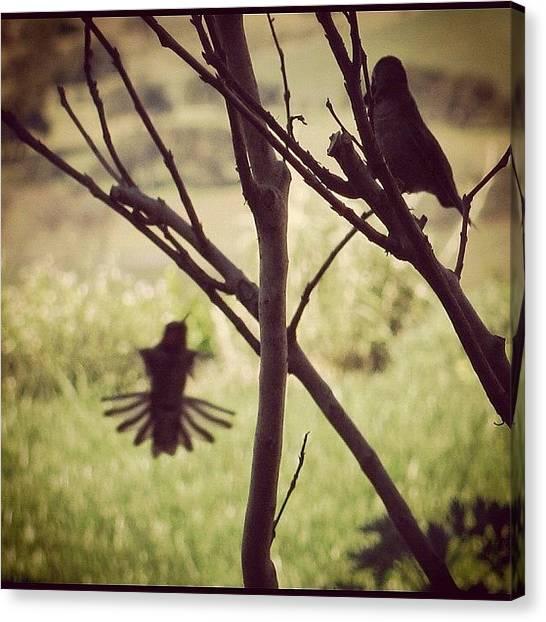 Hummingbirds Canvas Print - #silhouettes #hummingbird by Cynthia Post