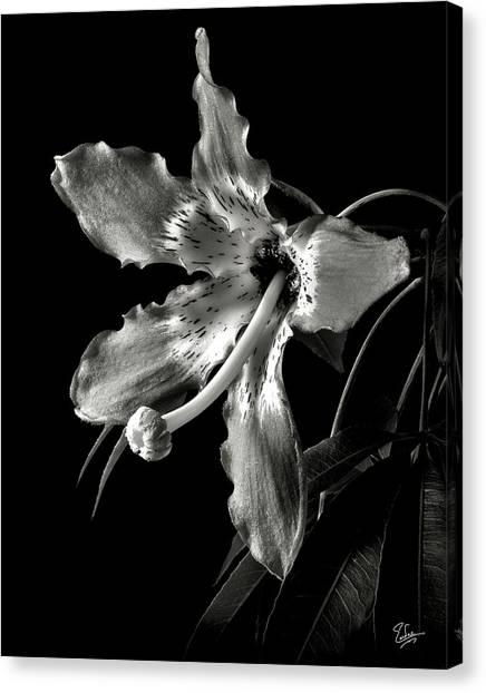 Silk Flower In Black And White Canvas Print