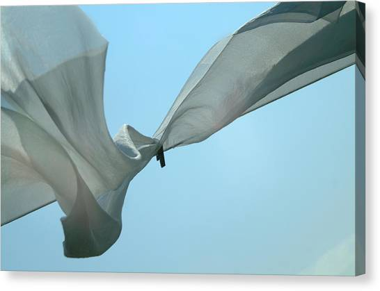 Silk Wings Canvas Print