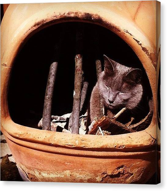 Ashes Canvas Print - Silly Cat Youre Not Firewood by Sara Lovelace