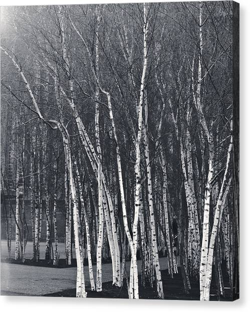 Silver Trees Canvas Print