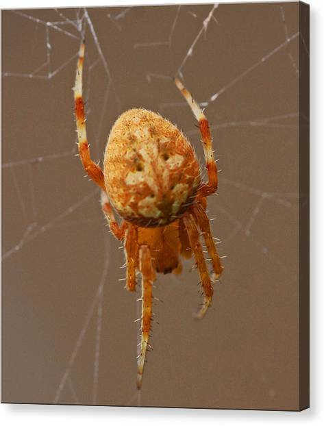 Simba The Spider Canvas Print by Chet King