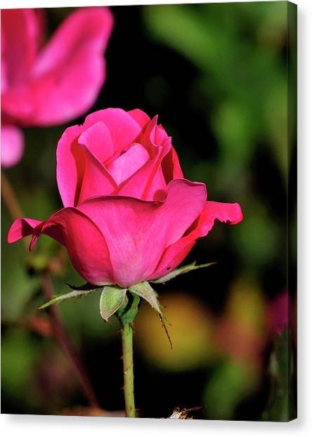 Simple Red Rose Canvas Print