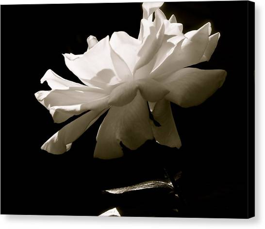 Simplistic Beauty In The Morning Canvas Print by Gloria Warren