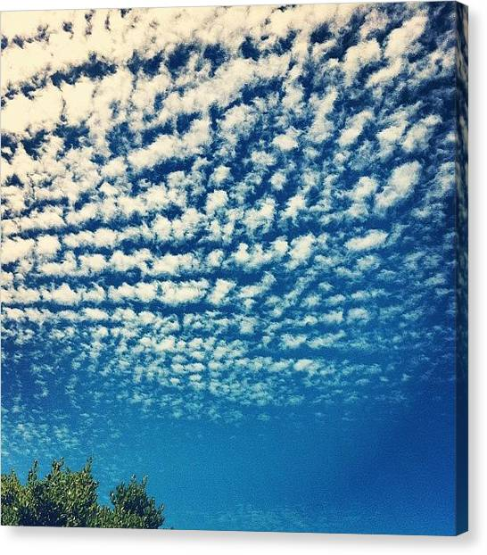 Kangaroo Canvas Print - Simply Beautiful Sky by Andrew Coulson