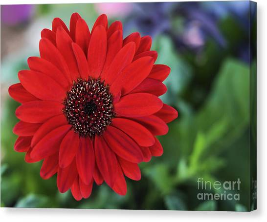 Simply Red Canvas Print by Jane Brack