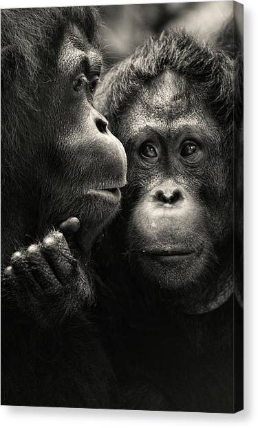 Monkeys Canvas Print - Singapore Zoo by By Toonman