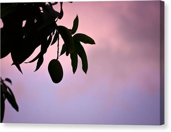 Mango Tree Canvas Print - Single Mango On A Tree At Twilight by Anya Brewley schultheiss