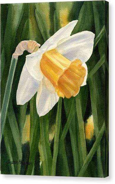 Daffodils Canvas Print - Single Yellow Daffodil by Sharon Freeman
