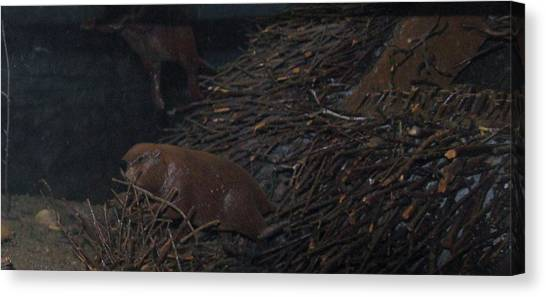 Beaver Dam Canvas Prints (Page #8 of 10) | Fine Art America