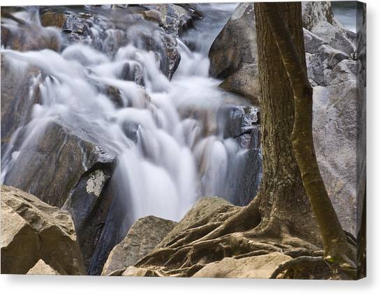 Sinks Cascade And Tree Canvas Print