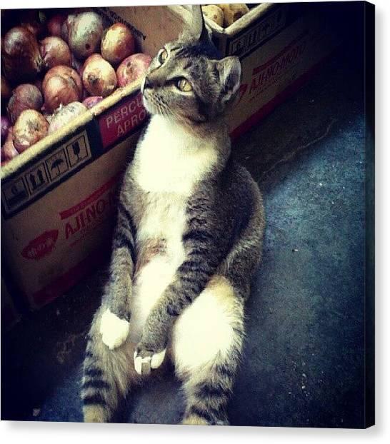 Onions Canvas Print - Sitting Like A #boss . #kitty #cat by Leanna Chong