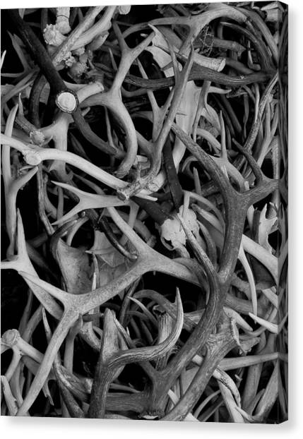 Skull And Antlers Canvas Print by Jen TenBarge