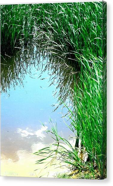 Sky Reflected Canvas Print by Suzanne Fenster