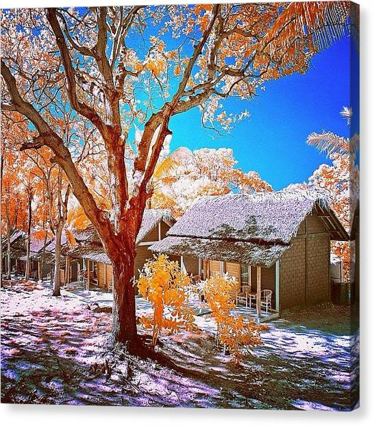 Vacations Canvas Print - #sky_perfection #ic_trees #ic_sky by Tommy Tjahjono