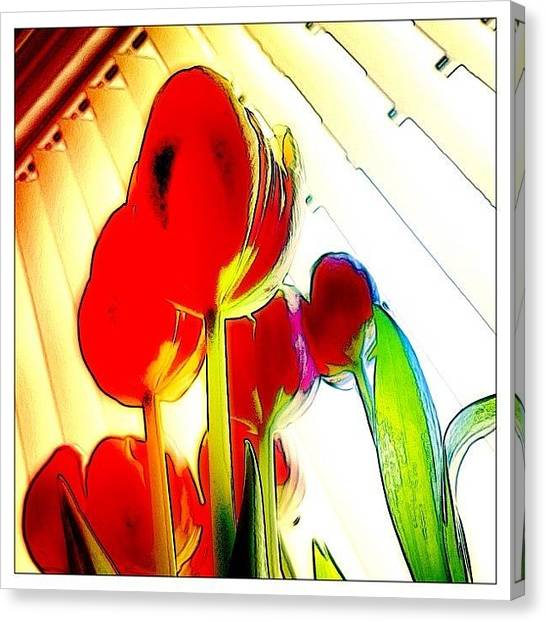 Tulips Canvas Print - Skywards by Mark B