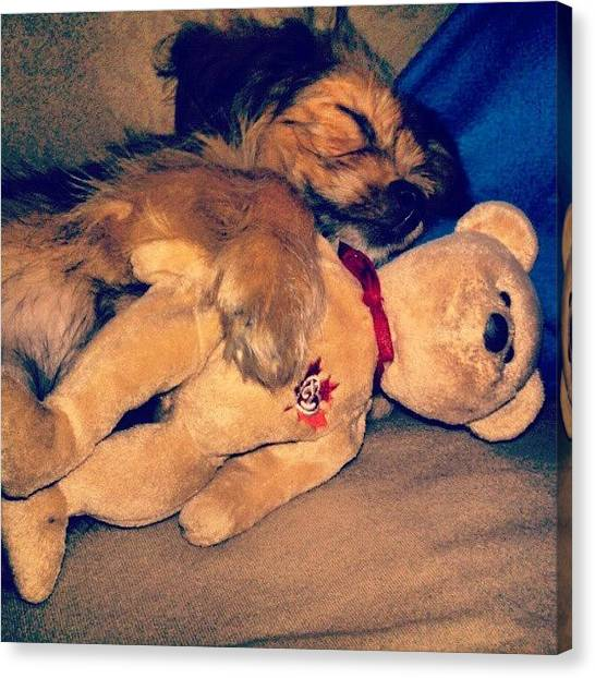 Teddy Bears Canvas Print - Sleep Buddy  by Kev Thibault