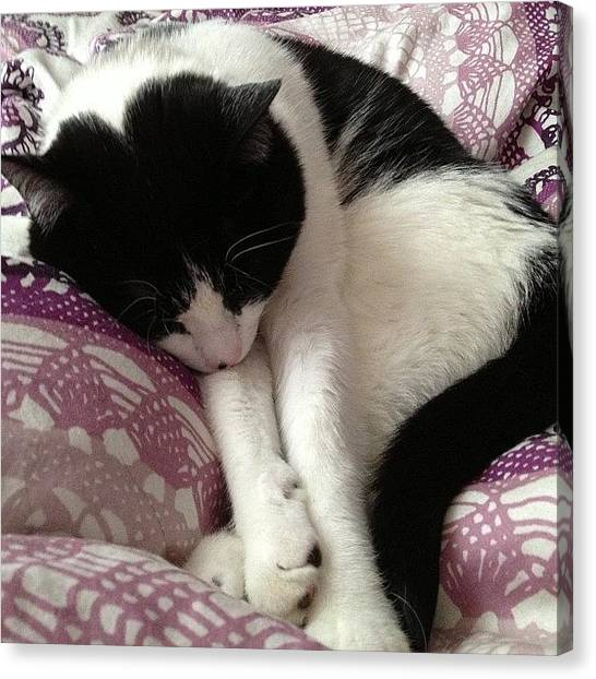 Tuxedo Canvas Print - Sleeping In: The Best! by Ilana Shamir
