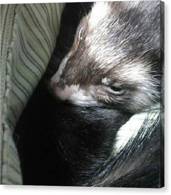 Outer Space Canvas Print - Sleepy Ferret On Way To Doctor. Which I by Alien Alice