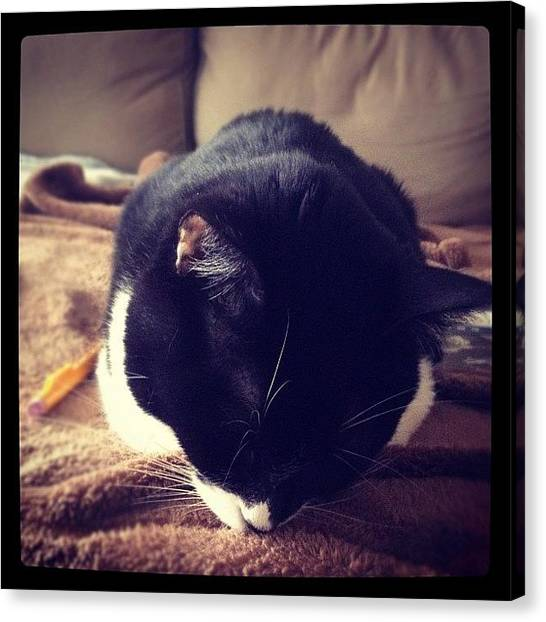 Tuxedo Canvas Print - Sleepy Little  by Momo and Little Cat