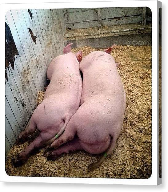 Ohio Canvas Print - Sleepy Piggies by Natasha Marco
