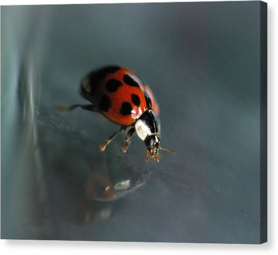 Ladybugs Canvas Print - Slip And Slide by Susan Capuano