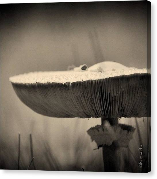 Follow Canvas Print - ...small Visitors by Matthew Blum