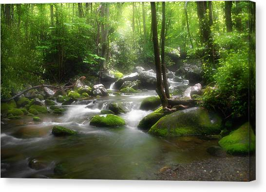 Mossy Forest Canvas Print - Smoky Mountain Stream by Cindy Haggerty