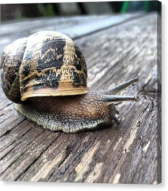 Tables Canvas Print - #snail #home #grainy #garden #creatures by Kevin Zoller