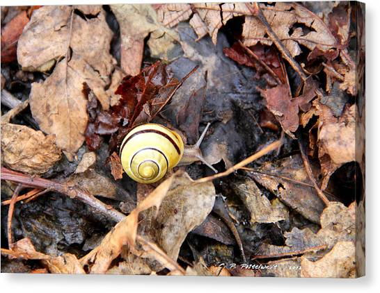 Snail In The Leaves Canvas Print by Carolyn Postelwait