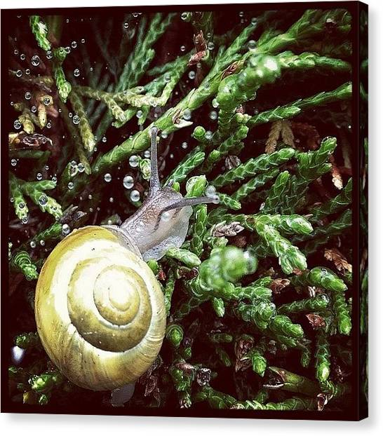 Spiral Canvas Print - Snail On A Hedge... Those Water by Robert Campbell