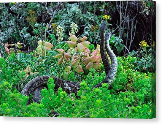 Snakes In The Grass Canvas Print by Richard Leon