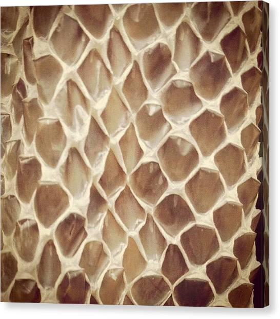 Pythons Canvas Print - #snakeskin #snake #python #texture by Darren Frankish
