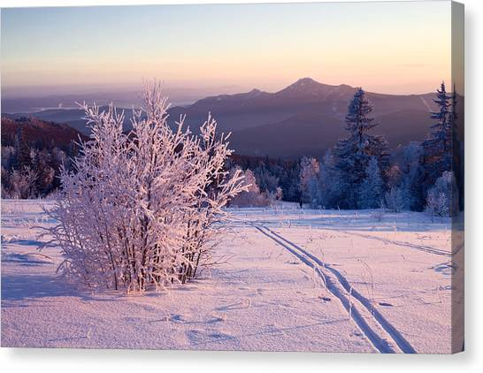 Ural Mountains Canvas Print - Snow-covered Bush And Ski-track by Evgeny Prokofyev