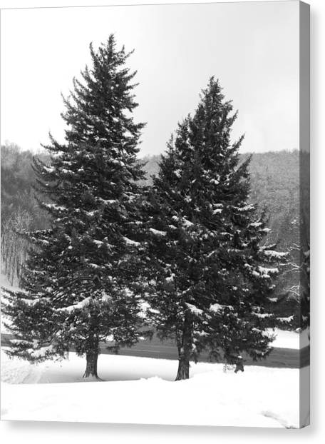 Snow Covered Trees Canvas Print by Carrie Munoz