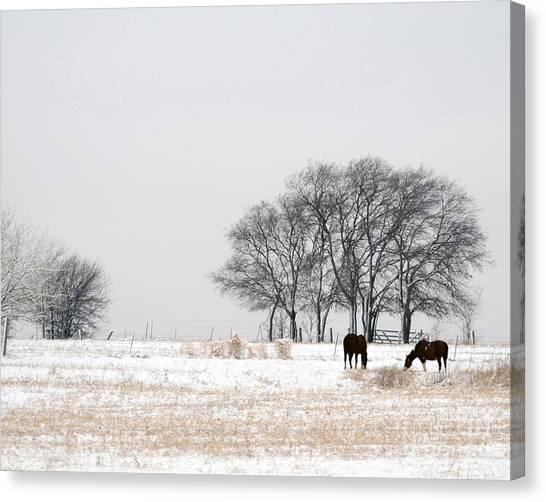 Snow Horses Canvas Print